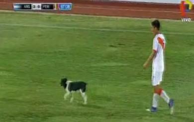 Perú vs. Argentina: el ingreso de un perro detuvo el partido por dos minutos